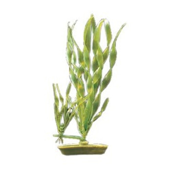 Aquascaper Corkscrew Vallisneria 5 In {requires 3-7 Days before shipping out}