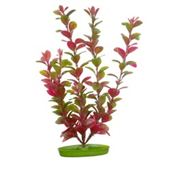 Aquascaper Red Ludwigia 5 Inch{requires 3-7 Days before shipping out}