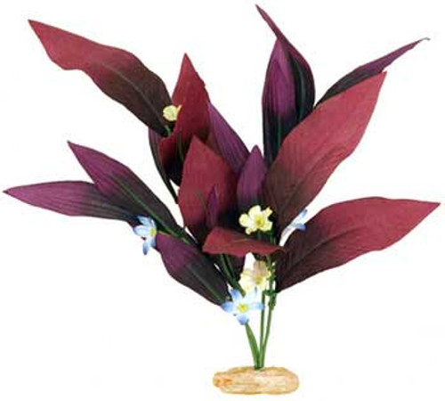 Blue Ribbon Colorburst Florals African Sword Plant With Flowers 13-14in