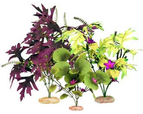 Blue Ribbon Colorburst Florals Amazon Broad Leaf Cluster Variety Pack 3 Plants