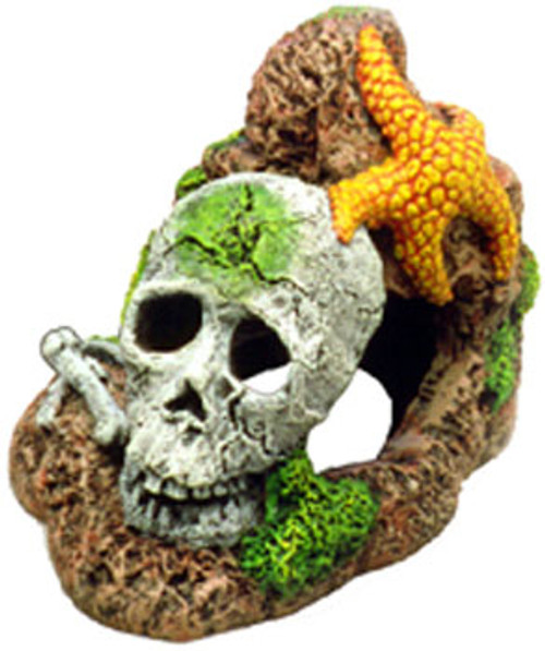 Blue Ribbon Exotic Environments Skull With Starfish 4x3x3in