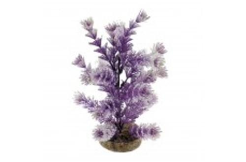 Blue Ribbon Colorburst Florals Water Crest Plant Purple And White