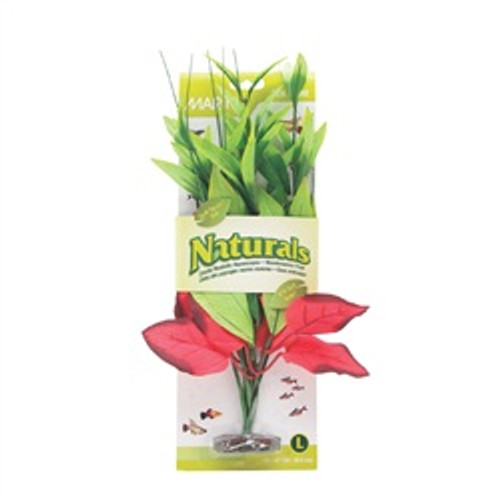 Ma Ntrl Red/green Pickerel Silk Plant L {requires 3-7 Days before shipping out}