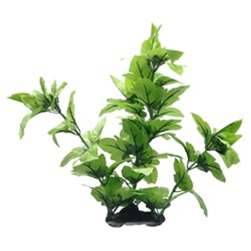 Fluval Lizard's Tail Plant 16in {requires 3-7 Days before shipping out}
