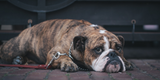 An Owner's Guide for the Best CBD Oil For Dogs