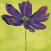 Purple Blooming I Poster Print by  Stephanie Marrott - Item # VARPDXSM1602068