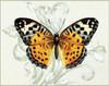 http://c328301.r1.cf1.rackcdn.com/PDXCC3195SMALL.jpg