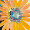 Sunshine Flower IV Poster Print by Leslie Bernsen - Item # VARPDXBLP253