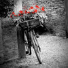 Flower Bike Square Poster Print by Gail Peck - Item # VARPDX9002D
