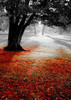 Autumn Contrast Poster Print by PhotoINC Studio - Item # VARPDXIN30796