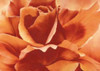 http://c328301.r1.cf1.rackcdn.com/PDXGA0102418LARGE.jpg