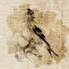 Bird Study III Poster Print by Lanie Loreth - Item # VARPDX9551M