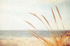 Warm Breeze Poster Print by Carolyn Cochrane - Item # VARPDXC855D