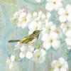 Spring Dream V Poster Print by  Danhui Nai - Item # VARPDX24929