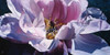 Inner Beauty Poster Print by Michael Schuh - Item # VARPDXMS11X