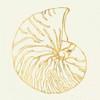 Coastal Breeze Shell Sketches Poster Print by  Anne Tavoletti - Item # VARPDX22652