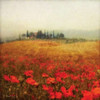 Tuscan Poppies Poster Print by Amy Melious - Item # VARPDXMEL478