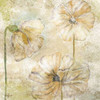 Poppy Passion Neutral II Poster Print by Rebecca Lyon - Item # VARPDXRB9947RL