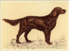 Hunting Dogs-Setter Poster Print by Andres Collot - Item # VARPDXCC2711