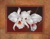 White Orchids Poster Print by Vivien Rhyan - Item # VARPDX6358
