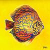 Bright Aquatic Life I Poster Print by Patricia Pinto - Item # VARPDX9212R