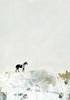 The Lone Horse Poster Print by  Sarah Ogren - Item # VARPDXSO1315