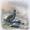 Bird between stones Poster Print by Jan Weenink - Item # VARPDXJW2005056