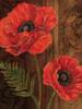 Poppy Portrait II Poster Print by Todd Williams - Item # VARPDXTWM041