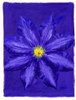 Clematis Poster Print by Brian James - Item # VARMGL600934
