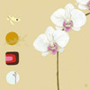 Orchid I Poster Print by Ally-Reader Gore - Item # VARPDX99085