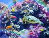 Aquarium Poster Print by Alixandra Mullins - Item # VARMGL601043