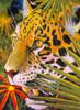 Jaguar jungle Poster Print by Graeme Stevenson - Item # VARMGL601718