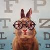 Four Eyes Poster Print by Lucia Heffernan - Item # VARPDXH1249D