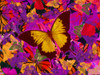Golden Butterfly Painting Poster Print by Alixandra Mullins - Item # VARMGL601250