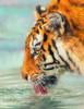 Tiger Cub on Rocks Poster Print by David Stribbling - Item # VARMGL601189
