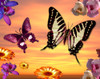 Butterfly Sunset Poster Print by Alixandra Mullins - Item # VARMGL600966