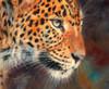 Leopard Chad Poster Print by David Stribbling - Item # VARMGL601568