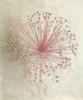 Allium Seedhead I Poster Print by Elisabeth Verdonck - Item # VARPDX62056