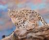 Snow Leopard Walking Poster Print by David Stribbling - Item # VARMGL600983