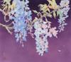 Fuji Poster Print by Haruyo Morita - Item # VARMGL601220