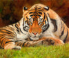 Tiger Looking Up Poster Print by David Stribbling - Item # VARMGL601320