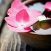 Zen Bowl Poster Print by PhotoINC Studio - Item # VARPDXIN38018