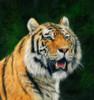 Mangrove Tiger Poster Print by David Stribbling - Item # VARMGL601186