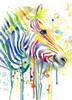 Colorful Zebra Poster Print by Jin Jing - Item # VARPDX937JIN1115