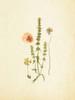 French Herbarium 4 Poster Print by Devon Ross - Item # VARPDX909ROS1304