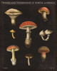 Mushroom Chart II Poster Print by Wild Apple Portfolio - Item # VARPDX28171