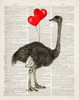 Ostrich In Love Poster Print by Christopher James - Item # VARPDX502JAM1222