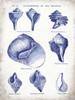 Indigo Shells II Poster Print by Gwendolyn Babbitt - Item # VARPDXBAB098