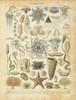 Oceanographie Poster Print by Gwendolyn Babbitt - Item # VARPDXBAB061