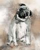 Sketchy Study Pug Poster Print by Carol Robinson - Item # VARPDX17532